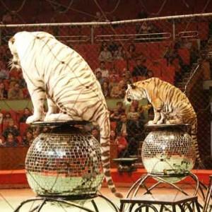 Дети играют в цирк